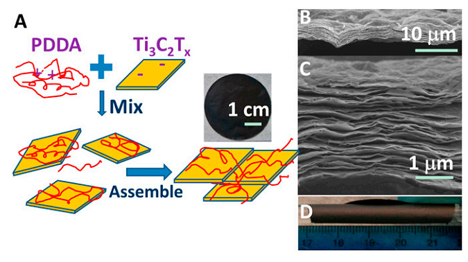 Fig. 3. Flexible free-standing Ti 3 C 2 T x /PDDA films. (A) Schematic illustration of synthesis of Ti 3 C 2 T x /PDDA hybrids and their assembled films. (B and C) Cross-sectional SEM images of films at different magnifications. (D) Digital image of a film wrapped around a glass rod with a 10 mm diameter.