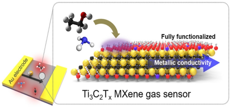 MXene is one of the most sensitive gas sensors ever reported